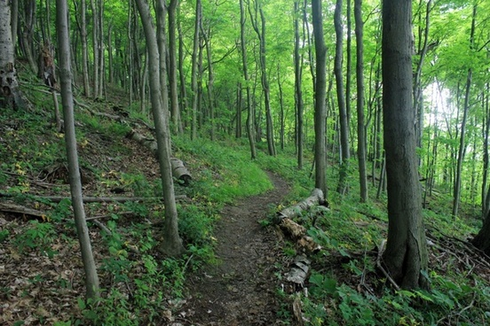 wooded walking path at eerie bluffs state park pennsylvania