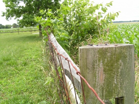 wooden fence amp tree