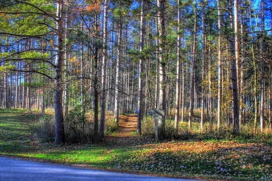 woods and trees at kettle moraine north wisconsin