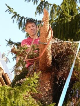 woodworks tree saw
