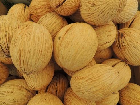 wool nut pong seeds
