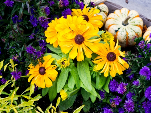 yellow and purple flowers in garden