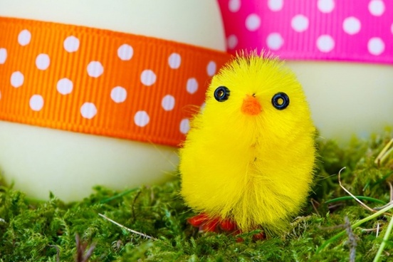 yellow easter chick