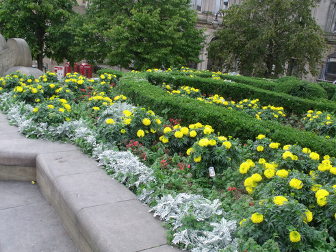 yellow floral display in victoria square