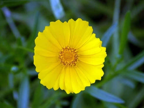 Yellow flower picture free stock photos download 13069 free stock yellow flower mightylinksfo