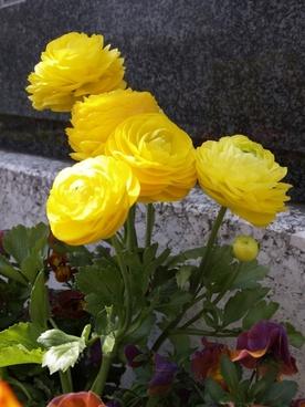 yellow flower decoration