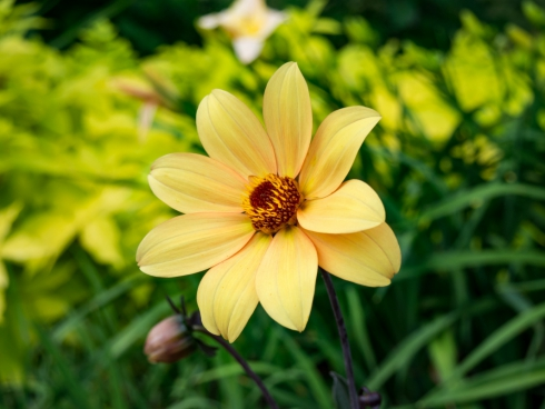 yellow flower in garden 2