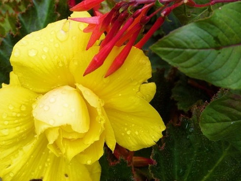 yellow flower raindrops