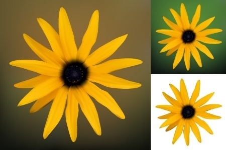 yellow flower design realistic style