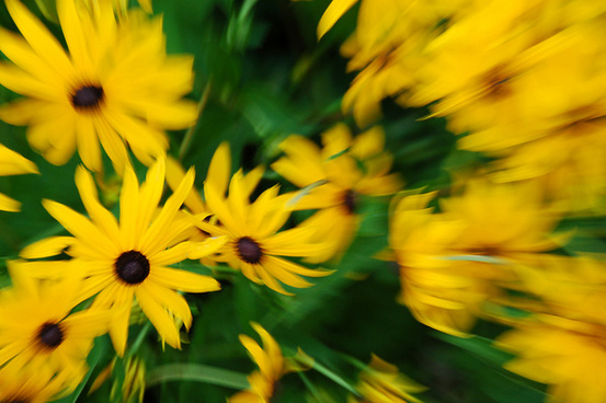 yellow flowers abstract
