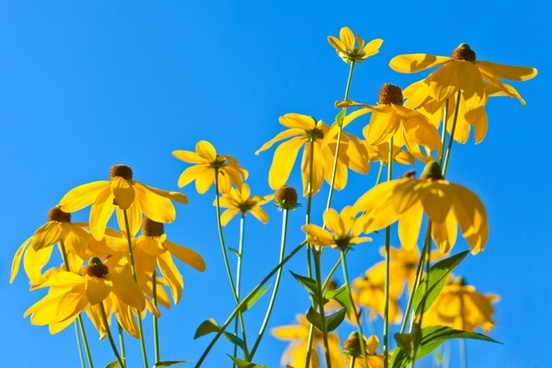 yellow flowers against sky