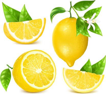 yellow lemon vector