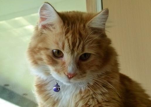 yellow red kitten