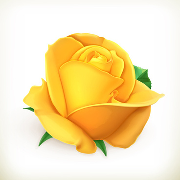 Vector yellow rose flower free vector download 13384 free vector yellow rose vector mightylinksfo