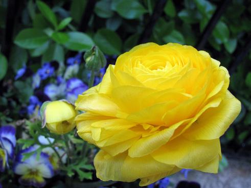 yellow the beautiful