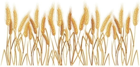 wheat free vector download  324 free vector  for decorative borders vector free gold decorative border vector