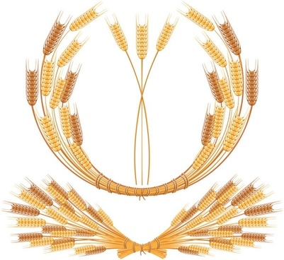 yellow wheat 05 vector