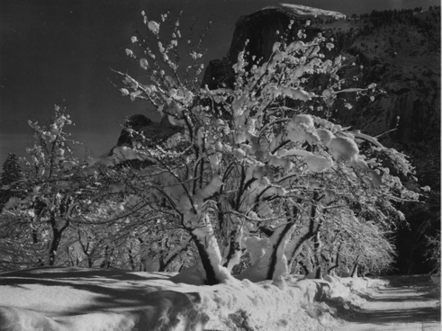 yosemite national park california apple tree