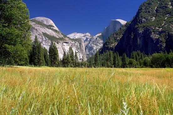 yosemite national park landscape field