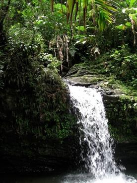yunque rain forest