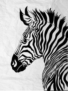 zebra drawing black white handdrawn sketch