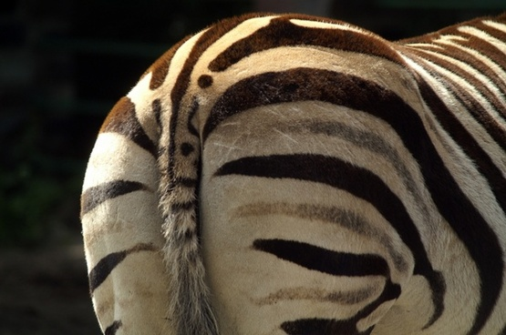 zebra flip side black