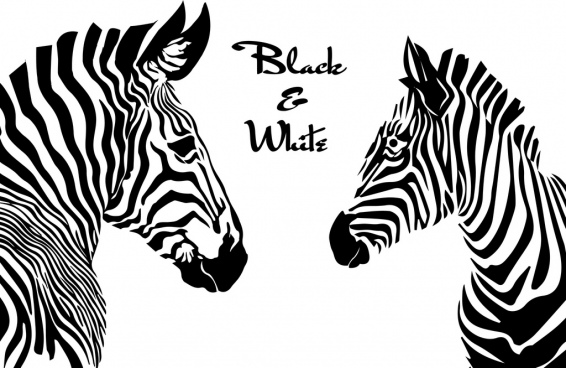 zebras drawing black white sketch