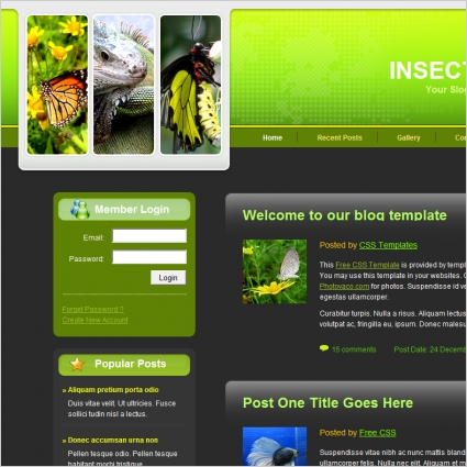 insect blog