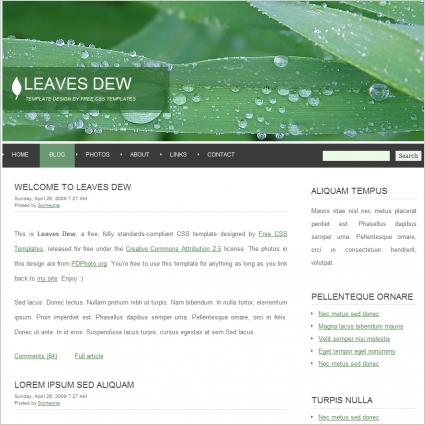 leaves dew