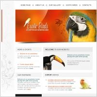 Exotic Birds Template