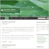 leaves dew