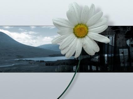 3D Flower Wallpaper Abstract 3D