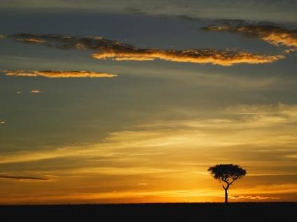 Acacia Tree Wallpaper Kenya World