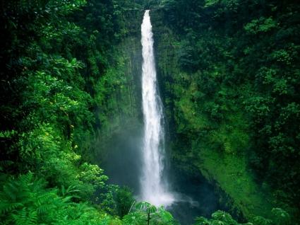 Akaka Falls Wallpaper Waterfalls Nature