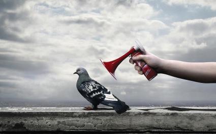 Anti Bird Spray