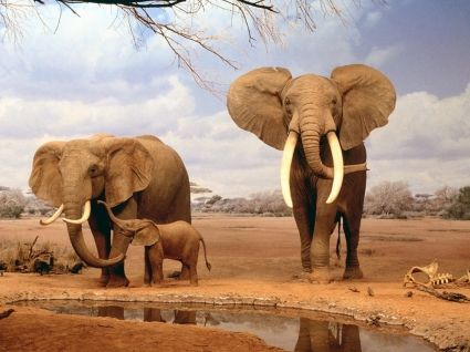 Are We There Yet Wallpaper Elephants Animals