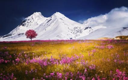 Autumn Fields Alps Mountains