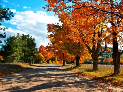 Autumn Lane Wallpaper Autumn Nature