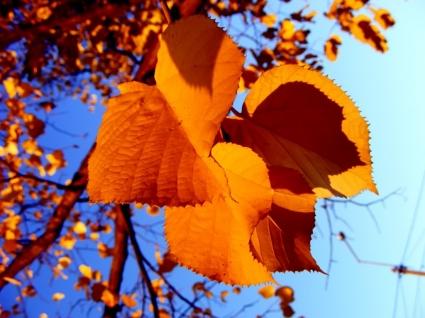 Autumn leafs Wallpaper Autumn Nature