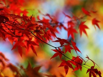 Autumn Red Wallpaper Autumn Nature