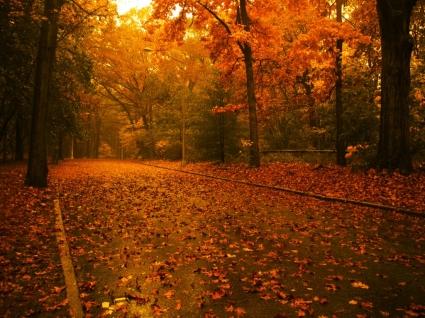 Autumn road Wallpaper Autumn Nature