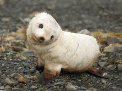 Baby Seal Wallpaper Seals Animals
