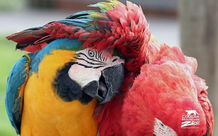 Best Friends Macaws