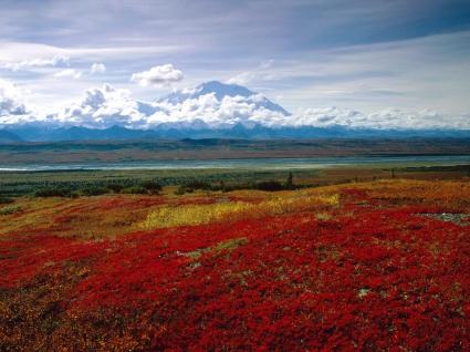 Brilliant Colors of Denali National Park, Alaska