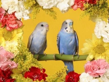 Budgerigars Wallpaper Birds Animals