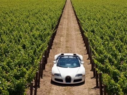 Bugatti Veyron Wallpaper Bugatti Cars