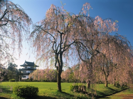 Castle Hirosaki Wallpaper Japan World