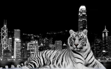 City Dark Tiger