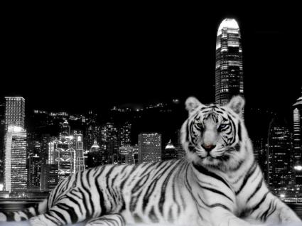 City Tiger Wallpaper Tigers Animals