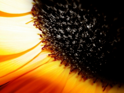 Close Up Wallpaper Flowers Nature